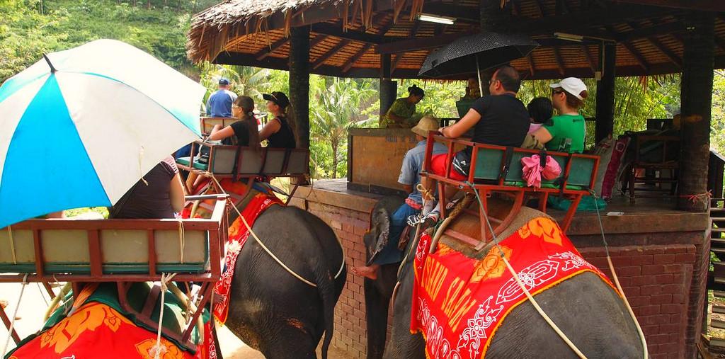 Прогулки на слонах пхукет