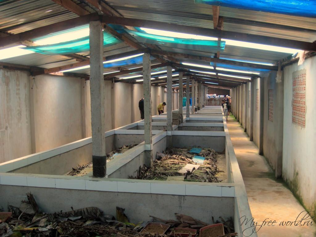Фабрика сверчков в Далате