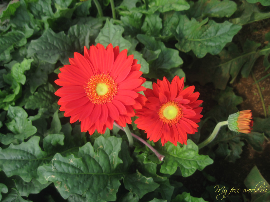 Цветочная ферма Далат
