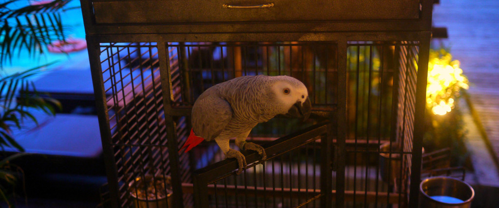 parrot phuket