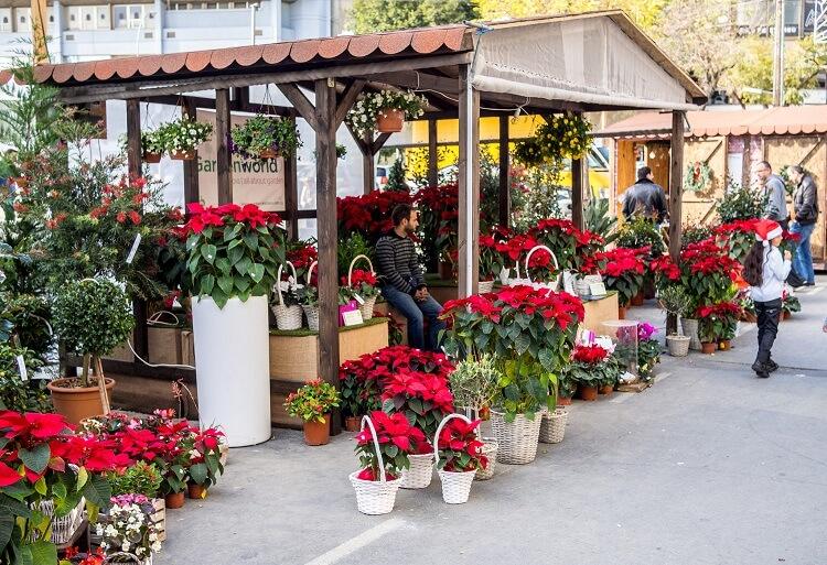 магазины Кипра